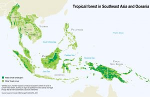 Tropical Forest in Southeast Asia and Oceania_GRID-Arendal